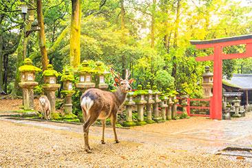 奈良県:イメージ